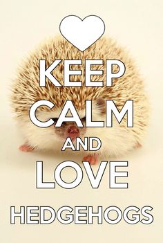 I love hedgehogs, but I don't think that I can stay calm!