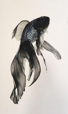 Fish by Julia Grayson Fish Drawings, Animal Drawings, Art Drawings, Beta Fish Drawing, Pretty Fish, Beautiful Fish, Beautiful Pictures, Phenix Tattoo, School Of Visual Arts