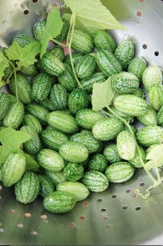 I grew these last year.  They were sooo good! Cucamelons: they're grape-sized watermelons that taste like cucumbers with a tinge of lime. And they're totally easy to grow!
