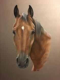 pur sang pastel horse art - equine art - art équestre - art animalier - cheval - horses painting - horse drawing