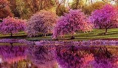 цветущие сады: 21 тыс изображений найдено в Яндекс.Картинках