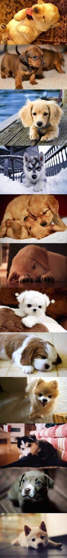 #perritos #perros…