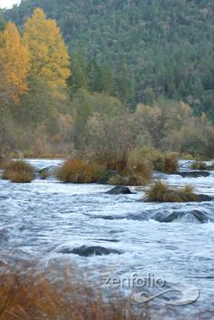 The Apple Gate River In Grants Pass Or By Traci Brown
