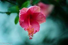 Emotion Through Flower