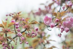 Blossoms After Rain by Janita Sumeiko on Blossoms, Rain, Inspired, Plants, Inspiration, Rain Fall, Biblical Inspiration, Flowers, Plant