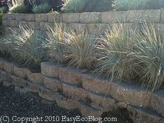 draught resistant plants | Drought Tolerant Plants, Water Conservation, Xeriscaping, Saving Water ...
