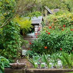 A practical shed is tucked into the corner of this vegetable garden, where young shoots are protected by glass cloches.