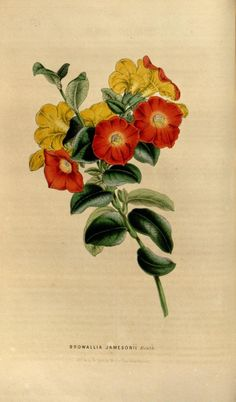 v.5 (1849) - Flore des serres et des jardins de l'Europe - Biodiversity Heritage Library