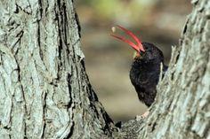 Bird Photography / Violet Wood-hoopoe / Halali Camp, Etosha, Northern Namibia