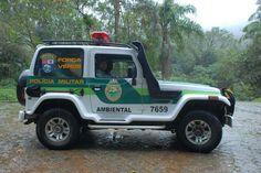 Polícia Ambiental não confirmou denúncia de recebimento de pinheiro araucária sem documento de origem