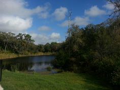 Old time Florida Scrub - right behind our house!
