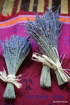 Dried Wheat Sheaf / Lavender Bunches. Decorative Arrangements. Harvest Weddings | eBay