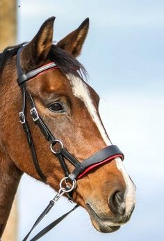 🌟Side Pull Aruba 🌟 A bitless bridle from the top line of FRA with color changeable padding in red, blue sand, and brown or black. Thick paddings behind the poll, browband, and noseband. With adjustable chin strap, cheek pieces, and throat strap. the noseband is anatomically shaped and has rings for rein attachment on both sides. The rein is made entirely of soft leather, with a central buckle and with a spring clip on both ends. Horse Training, Horse Stuff, Tack, Soft Leather, Watercolor Art, Black And Brown, Pony, Horses, Spring