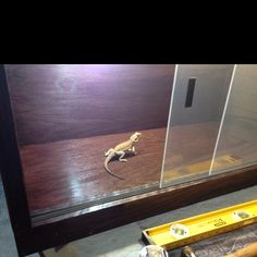 Build Your Own Bearded Dragon Cage Diy 4x2x2 Cage