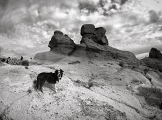 "Zoey #borderaussie #dog #happydog #red #cliffs #national #conservation #area #spring #hike #sandstone #mountains #hoodoos #sediment #layers #desert #mars #landscape #iphoneography #iphone6sphotography #petrifiedwood #blackandwhite #lenkacam #olloclip by jcook Follow ""DIY iPhone 6/ 6S Cases/ Covers/ Sleeves"" board on @cutephonecases http://ift.tt/1OCqEuZ to see more ways to add text add #Photography #Photographer #Photo #Photos #Picture #Pictures #Camera #Only #Pic #Pics to #iPhone6S Case…"