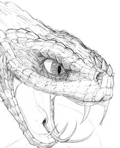 snake head drawing - Google Search                                                                                                                                                                                 More
