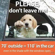Reminder during the summer months. This is called animal abuse and it's against the law.