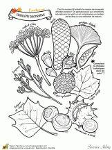 Un automne de rêve, la cueillette décorative