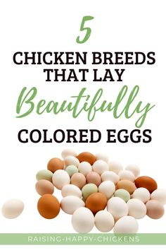 Which chickens lay colored eggs? This may not be something you think about when you first start raising chickens. After all, you're grateful for their delicious, nutritious eggs. As time goes on, though, you may well find yourself wanting a bit of a difference in your egg basket. A little colour to make it look pretty. It's then you need to know more about chickens that lay different coloured eggs. Here, we cover five of the most popular colours and the breeds which lay them. Chicken Egg Colors, Chicken Eggs, Brown Eggs, Blue Eggs, Raising Backyard Chickens, Pet Chickens, Egg Facts, Emu Egg, Eggs For Sale