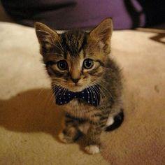 #Cats #Cat #Kittens #Kitten #Kitty #Pets #Pet #Meow #Moe #MeowMoe #CuteCats   Looking good in a bow Mister Cat! ' ...   http://www.meowmoe.com/109/