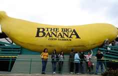 Australia's original and most famous 'Big Thing' In 1964 John Landi wanted something to make passing traffic stop at his road side banana stall. With assistance of a local engineer, Alan Chapman, they set about designing the giant banana by cutting the best looking banana he could find into 40 pieces and developing plans from which builders could work from. The biggest banana in the world was officially opened on December 22 that year.