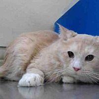 Pet Card Cat Adoption Cats Pet Adoption