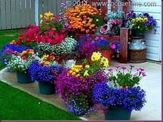 gorgeous container flowers @ DIY House Remodel. Love all the colours, especially the blues.