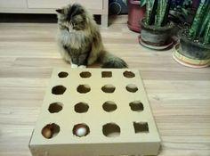 Beautiful katzenspielzeug selber machen