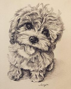 Some gifts are big. Others are small. But gifts that come from the heart Are the best gifts of all! 🎁 How gorgeous is this drawing by… Wonder Woman Art, Puppy Drawing, Cavapoo Puppies, Cool Drawings, Best Gifts, Good Things, Tags, Scribble, Valencia