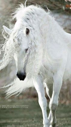 Beautiful Horse Pictures, Most Beautiful Horses, Animals Beautiful, Cute Horse Pictures, Cute Horses, Pretty Horses, Horse Love, Andalusian Horse, Friesian Horse