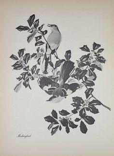 Mockingbird Vintage 1950 Menaboni Drawing Illustration Print Menabonis Birds Black And White