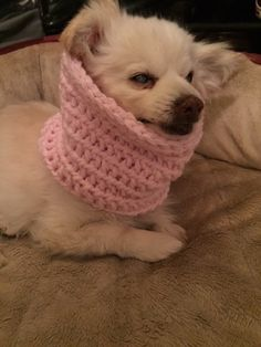 Dog Snood The Red/Pink Rose Infinity Dog Snood by BKLYNHandmade