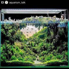 Amazing Aquascape Freshwater Gallery Ideas 59