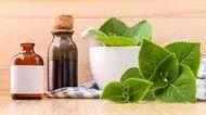 Seznam – najdu tam, co neznám Oregano Oil Benefits, Herbs For Anxiety, Healthy Herbs, Herb Garden, Health Benefits, Smoothie, Herbalism, Health Fitness, Plants