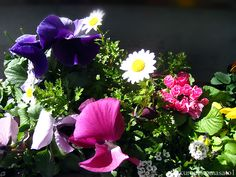 おはようございます。今日もたくさんの花と笑顔が咲きますように。