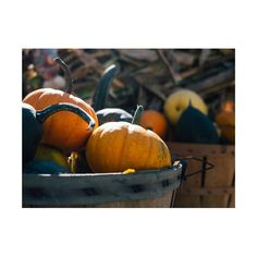 Some great stuff about #pumpkins - Just in time for #Halloween !!!