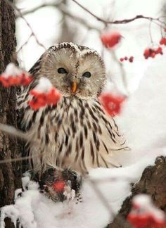 Owl on a snowy perch!  He looks happy!
