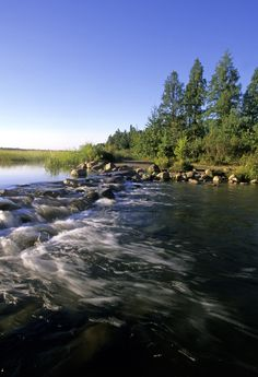 Birdwatching hotspot: Itasca State Park. The home to the headwaters of the Mississippi River, Itasca State Park in Minnesota also welcomes dozens of bird species throughout the year to its boreal forests and mixed hardwoods.