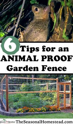 6 Tips to Create an Animal Proof Garden Fence - The Seasonal Homestead Small Garden Fence, Deer Garden, Fenced Vegetable Garden, Vegetable Garden Design, Garden Fencing, Lake Garden, Vegetables Garden, Fruit Garden, Whatsapp Logo