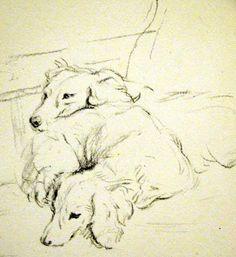 Afghan Hound Times - Afghan Hound Art Illustration by Lucy Dawson