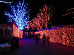 Zoo Lights at the Oregon Zoo is one of the holiday activities we've always meant to do, but never managed to actually attend. In Portland, the holiday season is Zoo Lights, Portland, Oregon, Concert, Christmas, Beautiful, Xmas, Concerts, Navidad