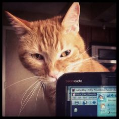 Computer savvy cat!  Catproof Your Computer free 30gb storage with code CATPROOF at https://www.surdoc.com/sign-up/?promo=catproof