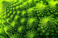 Romanesco Brokoli