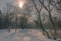 Snow in the vienna city park by ChristianThür Photography on Creative Market Winter Day, Park City, Vienna, Snow, Creative, Photography, Outdoor, City Life, Outdoors
