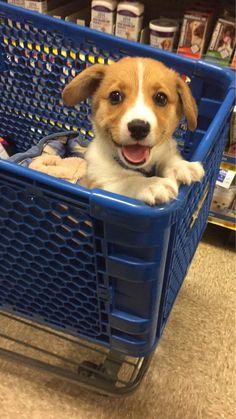 Take me to the dog food.   http://ift.tt/2cObCQY via /r/dogpictures http://ift.tt/2cNCiGl  #lovabledogsaroundtheworld