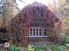 Фото-М.Н.С.-Наша дача. Осень