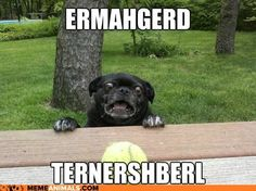 Ermahgerd sner!!! | Seriously though | Pinterest | Humor ...