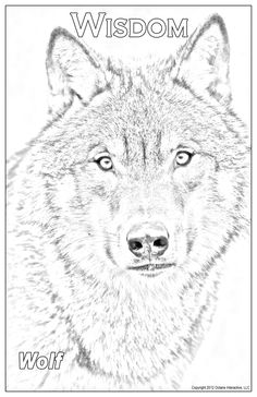 Husky, Wildlife, Posters, American, Dogs, Animals, Shopping, Animais, Animales