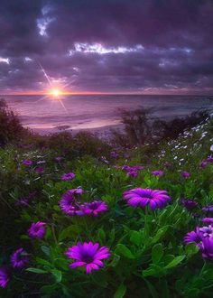 The most beautiful landscape photos animated Beautiful Sunset, Beautiful World, Beautiful Images, Beautiful Flowers, Flowers Nature, Landscape Photography, Nature Photography, Black Flowers, Nature Pictures