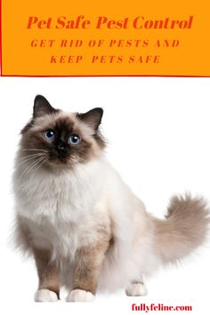 Summer will be here in a few short weeks, and with that come bugs of all sorts. Here are pet safe solutions to control pests this summer #pets #petsafe pest control